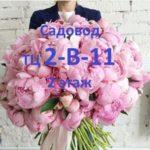 САДОВОД 2В-11 - поставщик женских футболок и шортов